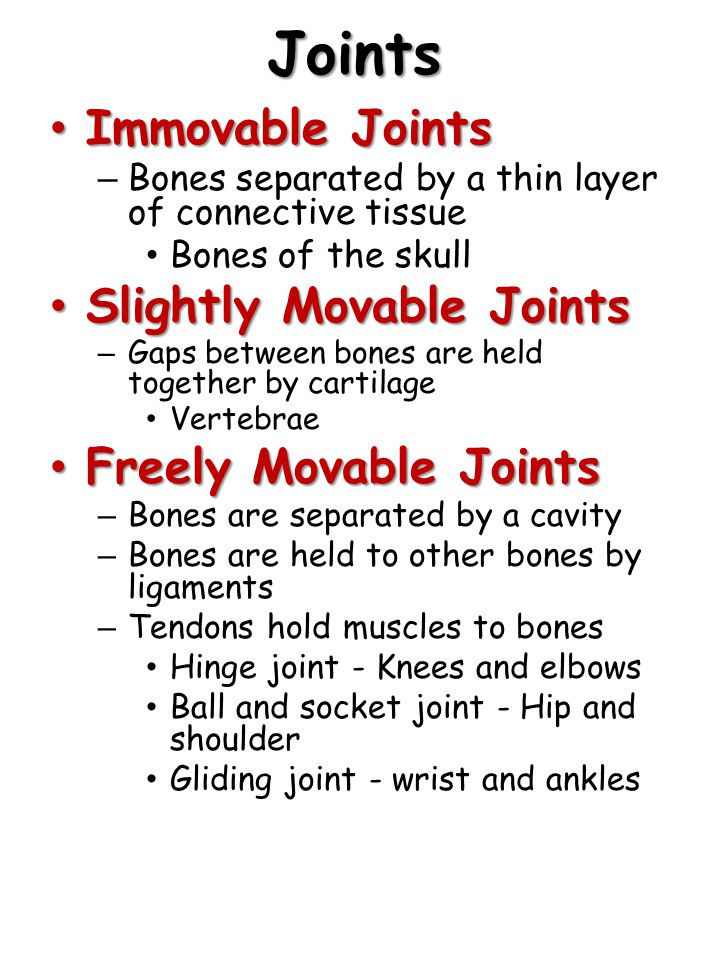 Joints Immovable Joints Immovable Joints – Bones separated by a thin layer of connective tissue Bones of the skull Slightly Movable Joints Slightly Movable Joints – Gaps between bones are held together by cartilage Vertebrae Freely Movable Joints Freely Movable Joints – Bones are separated by a cavity – Bones are held to other bones by ligaments – Tendons hold muscles to bones Hinge joint - Knees and elbows Ball and socket joint - Hip and shoulder Gliding joint - wrist and ankles