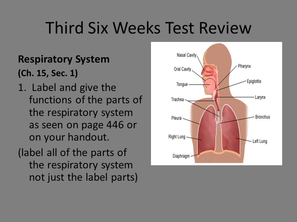 Third Six Weeks Test Review Respiratory System (Ch. 15, Sec. 1) 1. Label and give the functions of the parts of the respiratory system as seen on page