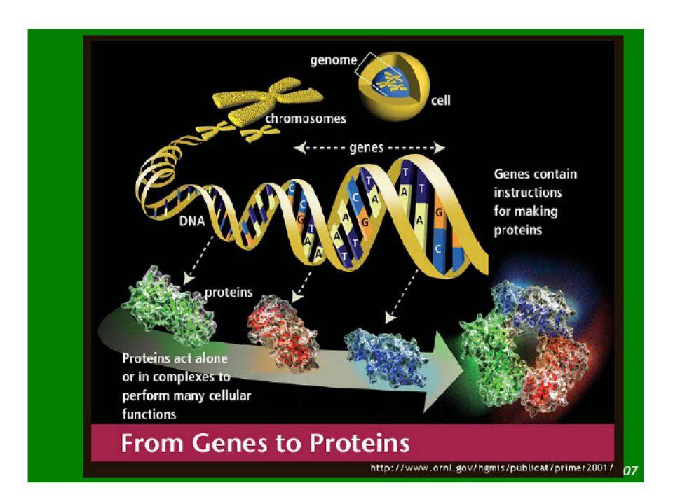 Presentasi 16 Sept.2011, FIMA, YARSIBoenjamin Setiawan,dr.,Ph.D.17 How are ES Cells Generated?