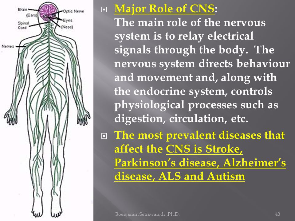 Presentasi 16 Sept.2011, FIMA, YARSIBoenjamin Setiawan,dr.,Ph.D.43  Major Role of CNS: The main role of the nervous system is to relay electrical signals through the body.