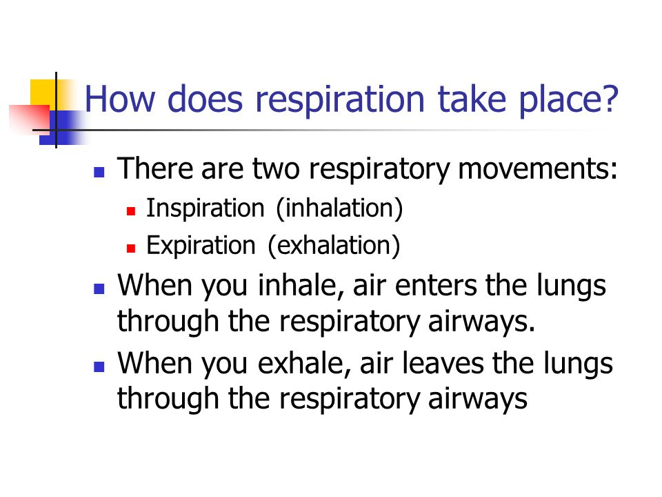 How does respiration take place? There are two respiratory movements: Inspiration (inhalation) Expiration (exhalation) When you inhale, air enters the