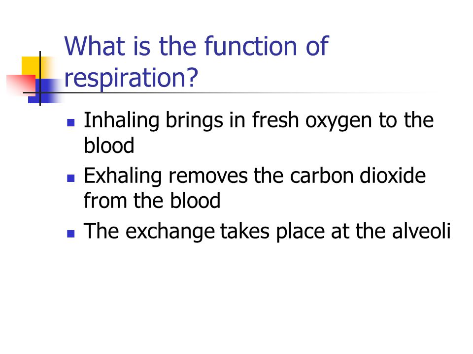 What is the function of respiration? Inhaling brings in fresh oxygen to the blood Exhaling removes the carbon dioxide from the blood The exchange take