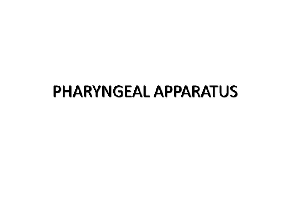 PHARYNGEAL APPARATUS PHARYNGEAL ARCH DERIVATIVES