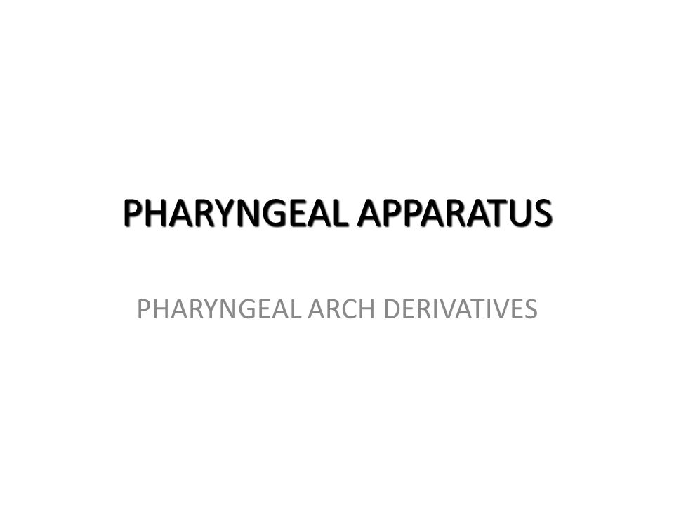 PHARYNGEAL APPARATUS PHARYNGEAL ARCH DERIVATIVES
