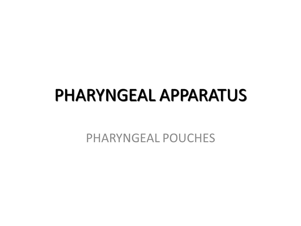 PHARYNGEAL APPARATUS PHARYNGEAL POUCHES