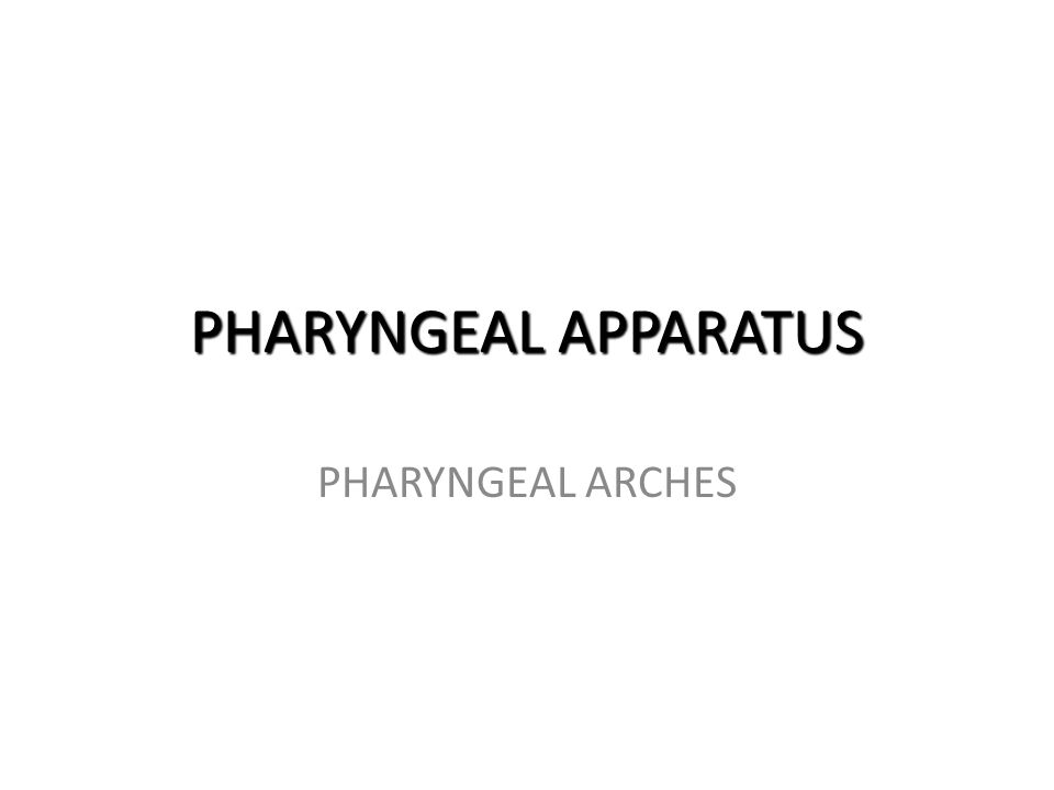 PHARYNGEAL APPARATUS PHARYNGEAL ARCHES