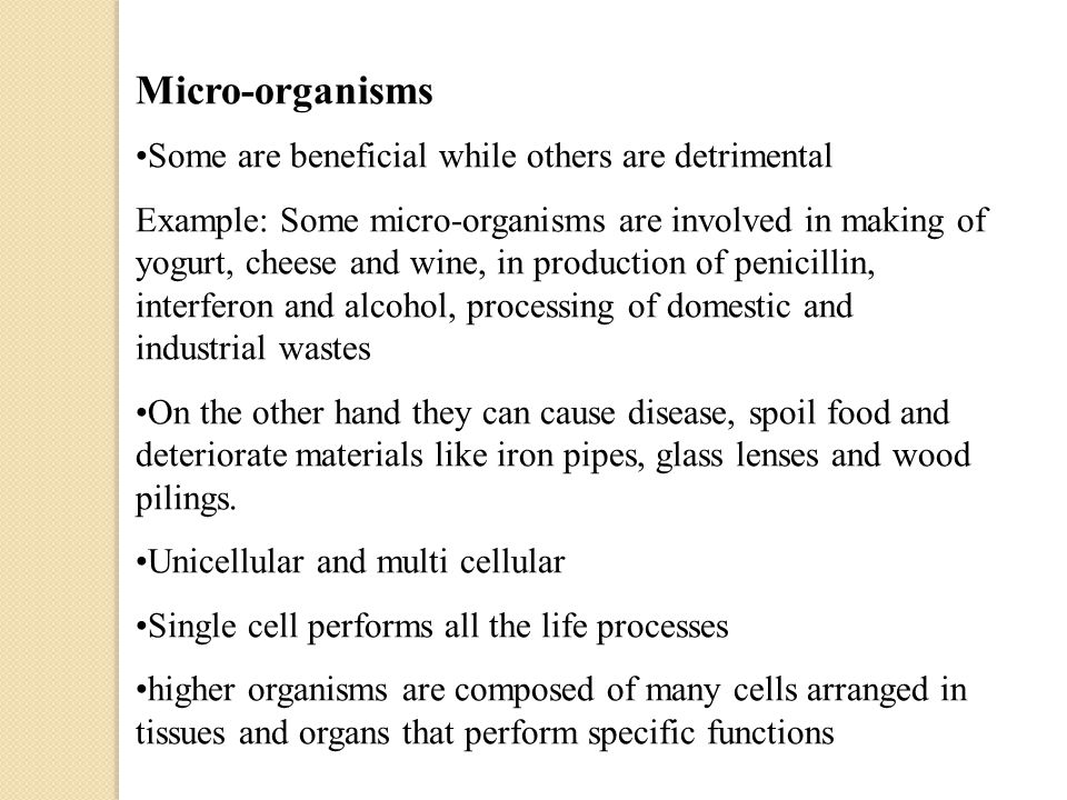 Micro-organisms Some are beneficial while others are detrimental Example: Some micro-organisms are involved in making of yogurt, cheese and wine, in production of penicillin, interferon and alcohol, processing of domestic and industrial wastes On the other hand they can cause disease, spoil food and deteriorate materials like iron pipes, glass lenses and wood pilings.