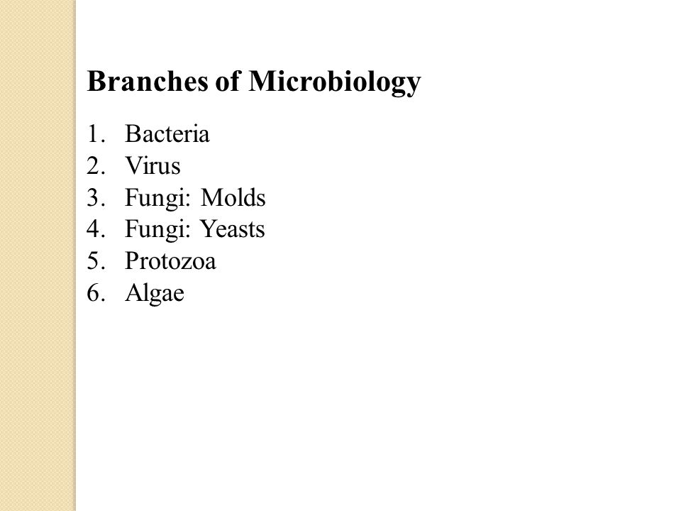 Branches of Microbiology 1.Bacteria 2.Virus 3.Fungi: Molds 4.Fungi: Yeasts 5.Protozoa 6.Algae