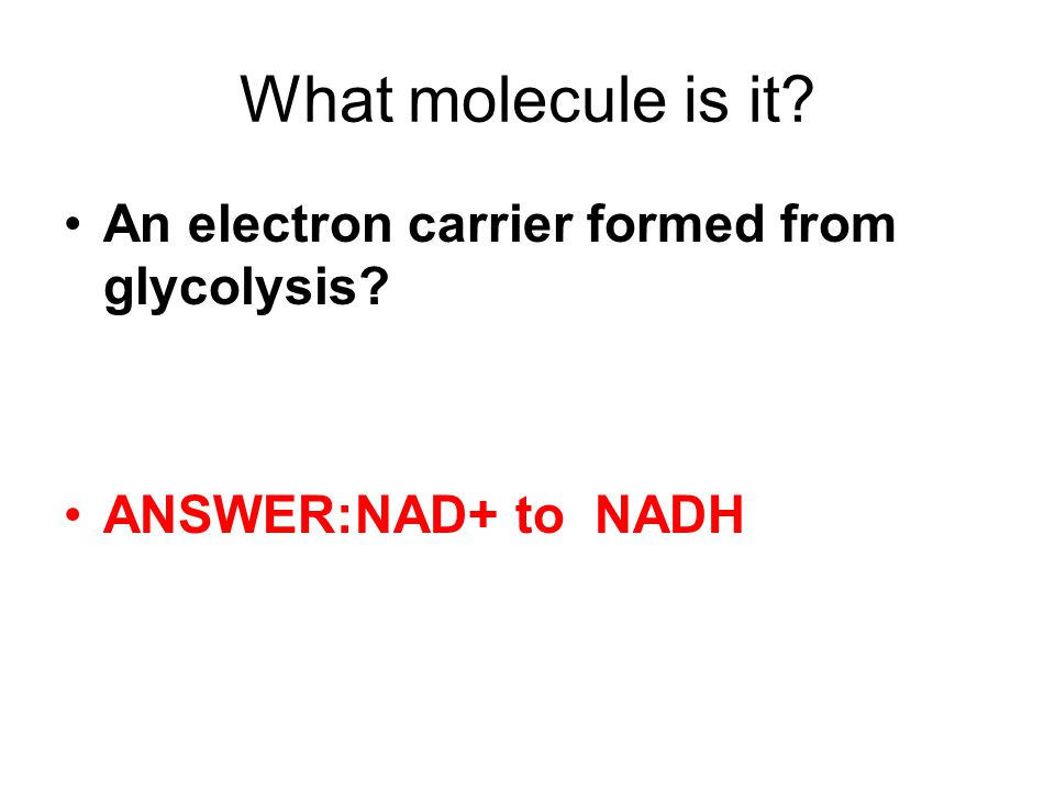 What molecule is it An electron carrier formed from glycolysis ANSWER:NAD+ to NADH