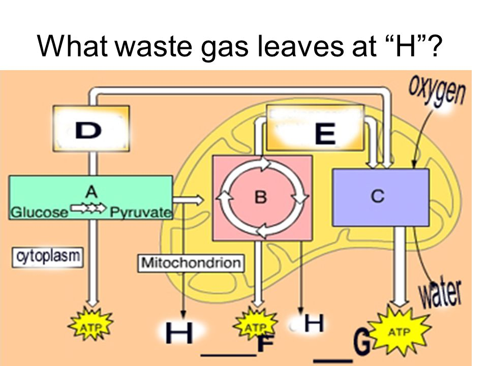 What waste gas leaves at H
