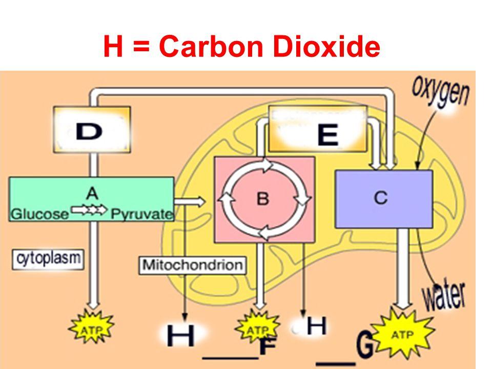 H = Carbon Dioxide