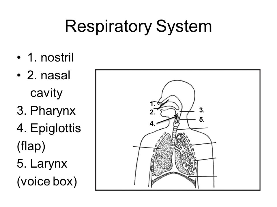 56.What is the respiratory system disorder.