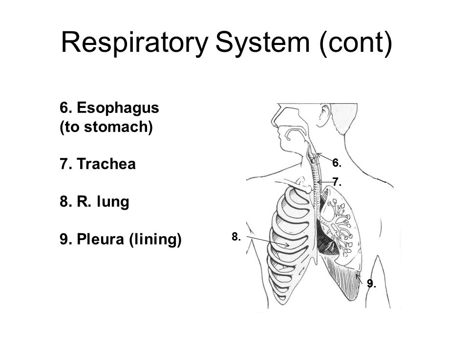 57. What is the formula for cellular respiration? C 6 H 12 O 6 + 6 O 2 6 CO 2 + 6 H2O + ATP