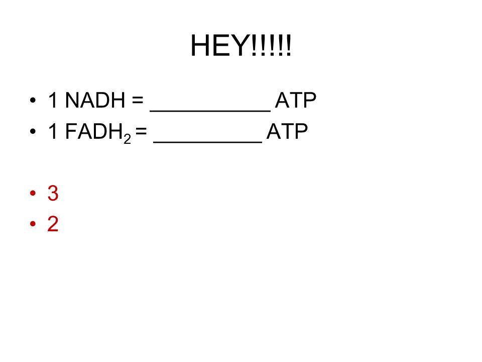 HEY!!!!! 1 NADH = __________ ATP 1 FADH 2 = _________ ATP 3 2