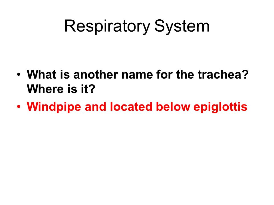 Respiratory System What is another name for the trachea.