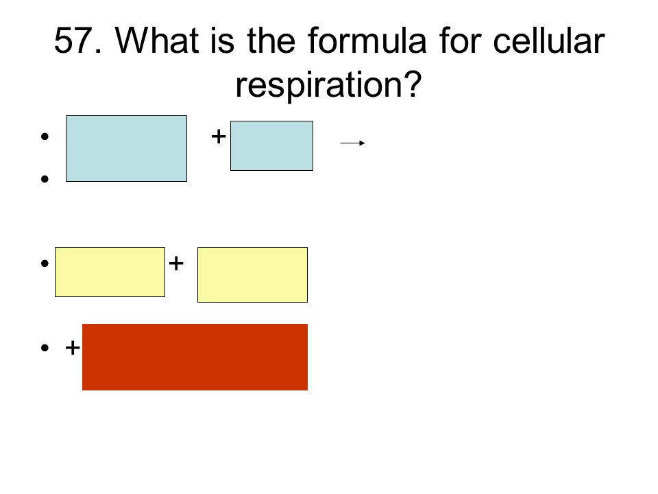 57. What is the formula for cellular respiration C 6 H 12 O 6 + 6 O 2 6 CO 2 + 6 H2O + ATP