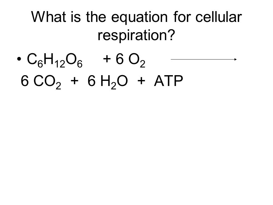 What is the equation for cellular respiration C 6 H 12 O 6 + 6 O 2 6 CO 2 + 6 H 2 O + ATP