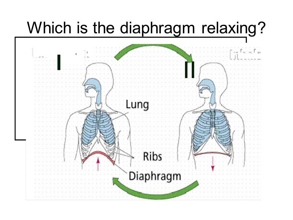 Which is the diaphragm relaxing
