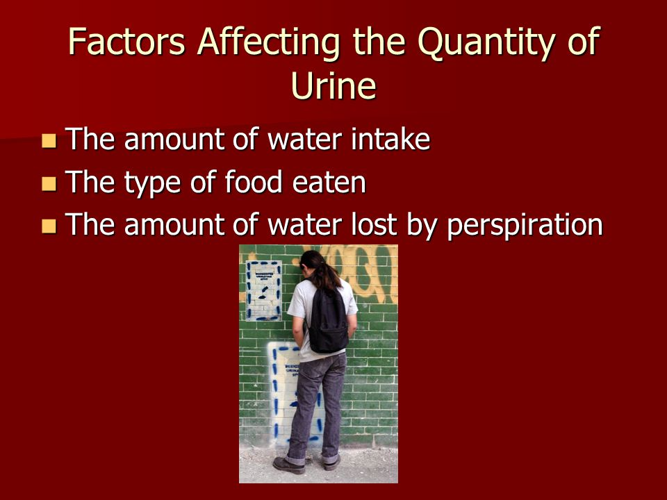 Factors Affecting the Quantity of Urine The amount of water intake The amount of water intake The type of food eaten The type of food eaten The amount of water lost by perspiration The amount of water lost by perspiration