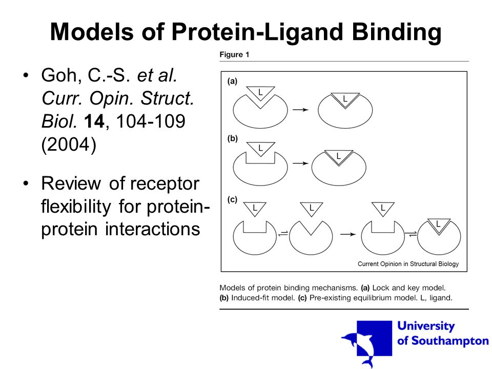 Models of Protein-Ligand Binding Goh, C.-S. et al. Curr. Opin. Struct. Biol. 14, 104-109 (2004) Review of receptor flexibility for protein- protein in