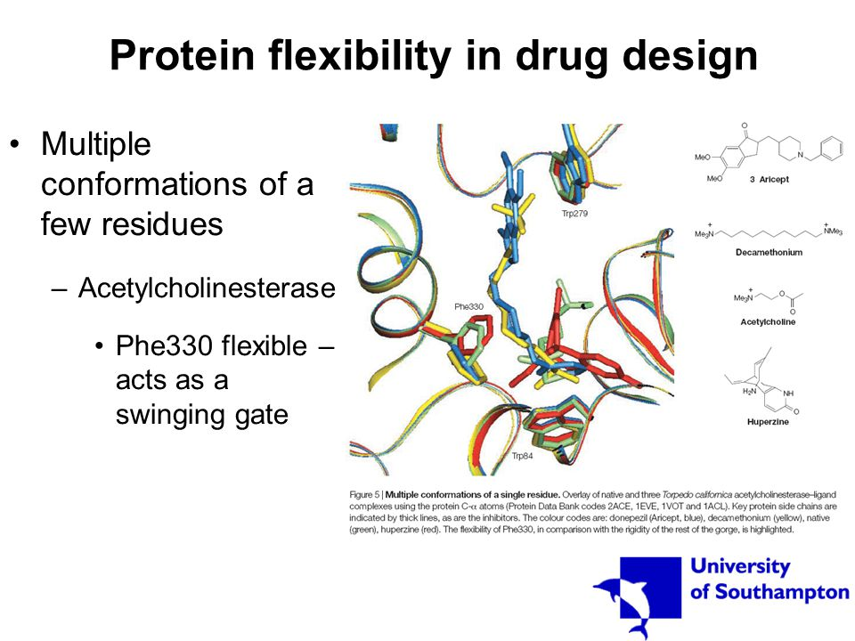 Protein flexibility in drug design Multiple conformations of a few residues –Acetylcholinesterase Phe330 flexible – acts as a swinging gate