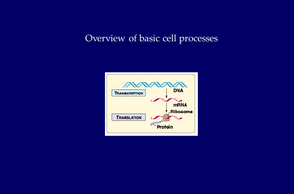 Overview of basic cell processes