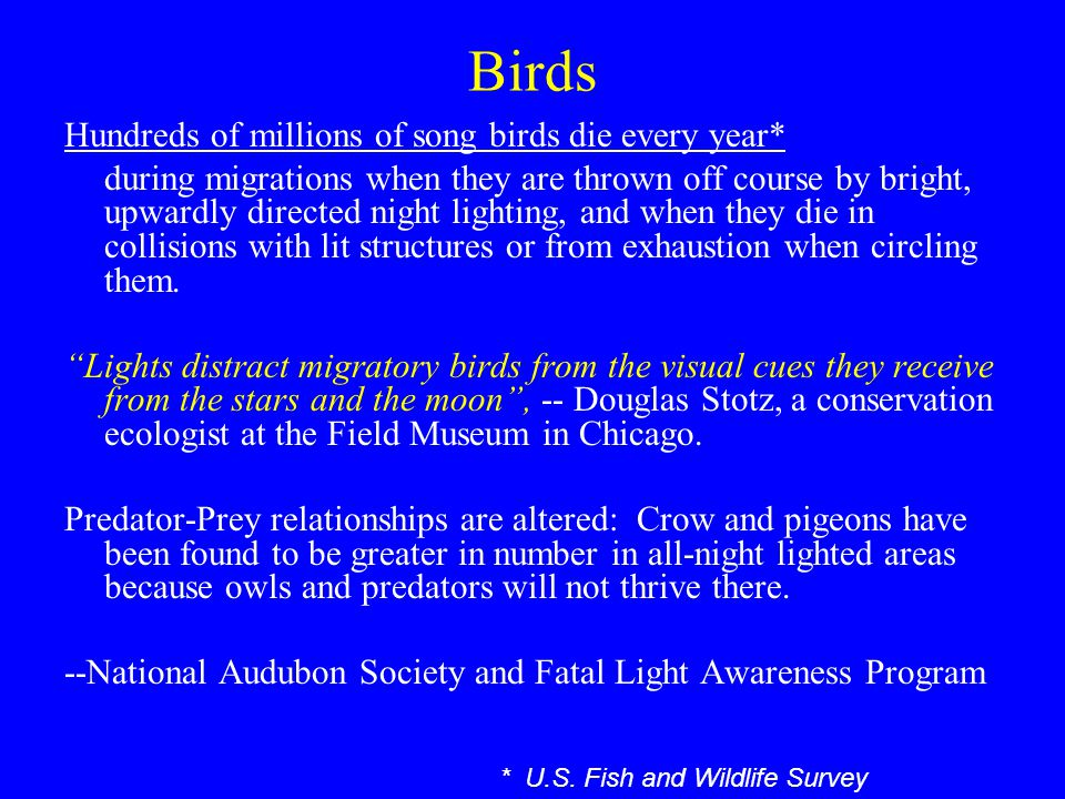 Birds Hundreds of millions of song birds die every year* during migrations when they are thrown off course by bright, upwardly directed night lighting, and when they die in collisions with lit structures or from exhaustion when circling them.