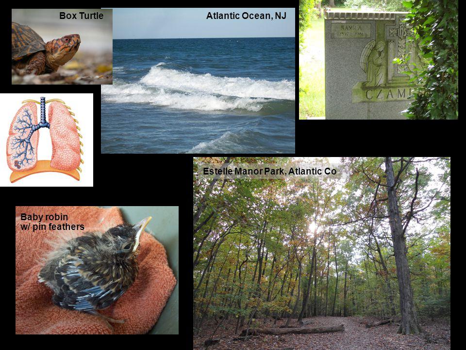 27 Atlantic Ocean, NJ Baby robin w/ pin feathers Estelle Manor Park, Atlantic Co Box Turtle