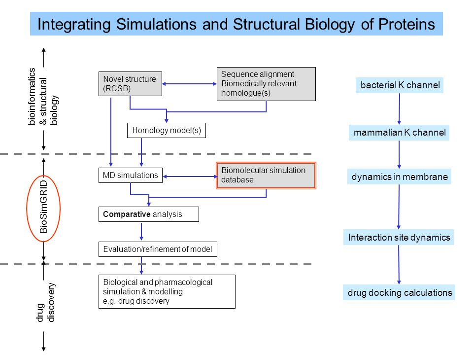 Integrating Simulations and Structural Biology of Proteins Novel structure (RCSB) Sequence alignment Biomedically relevant homologue(s) Homology model(s) MD simulations Biomolecular simulation database Comparative analysis Evaluation/refinement of model Biological and pharmacological simulation & modelling e.g.