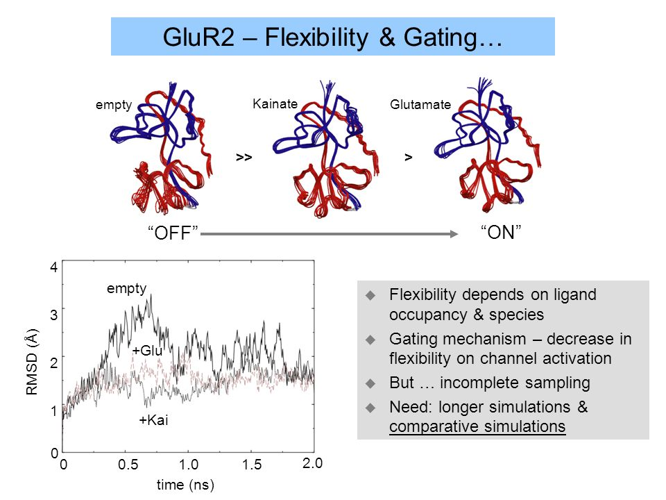 GluR2 – Flexibility & Gating… u Flexibility depends on ligand occupancy & species u Gating mechanism – decrease in flexibility on channel activation u But … incomplete sampling u Need: longer simulations & comparative simulations empty Kainate Glutamate >> > OFF ON 01.01.50.5 1 2 3 4 time (ns) RMSD (Å) 0 empty +Kai +Glu 2.0