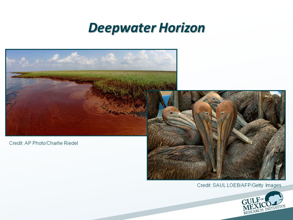 The Effects of the Macondo Oil Spill on Coastal Ecosystems Lead Investigator: Nancy N.