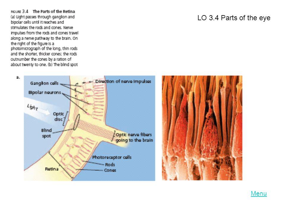 Menu LO 3.4 Parts of the eye