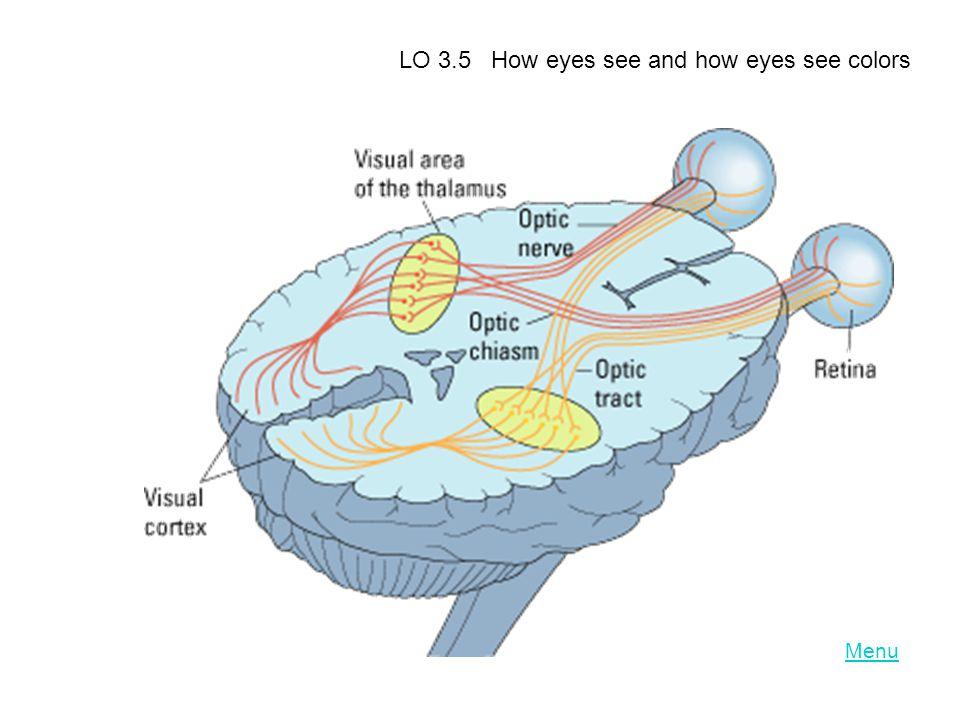 Menu LO 3.5 How eyes see and how eyes see colors
