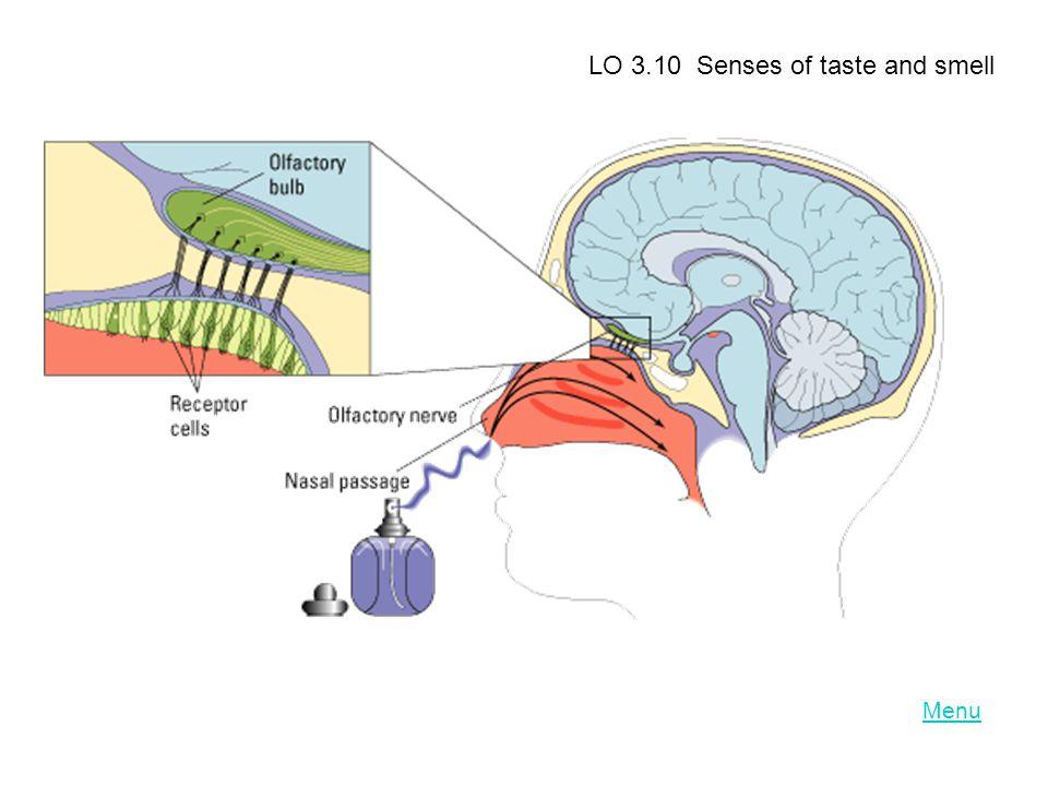 Menu LO 3.10 Senses of taste and smell
