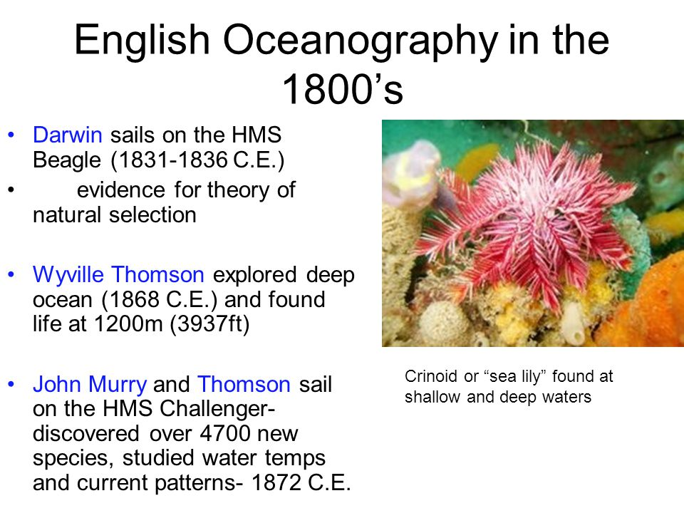 English Oceanography in the 1800's Darwin sails on the HMS Beagle (1831-1836 C.E.) evidence for theory of natural selection Wyville Thomson explored deep ocean (1868 C.E.) and found life at 1200m (3937ft) John Murry and Thomson sail on the HMS Challenger- discovered over 4700 new species, studied water temps and current patterns- 1872 C.E.