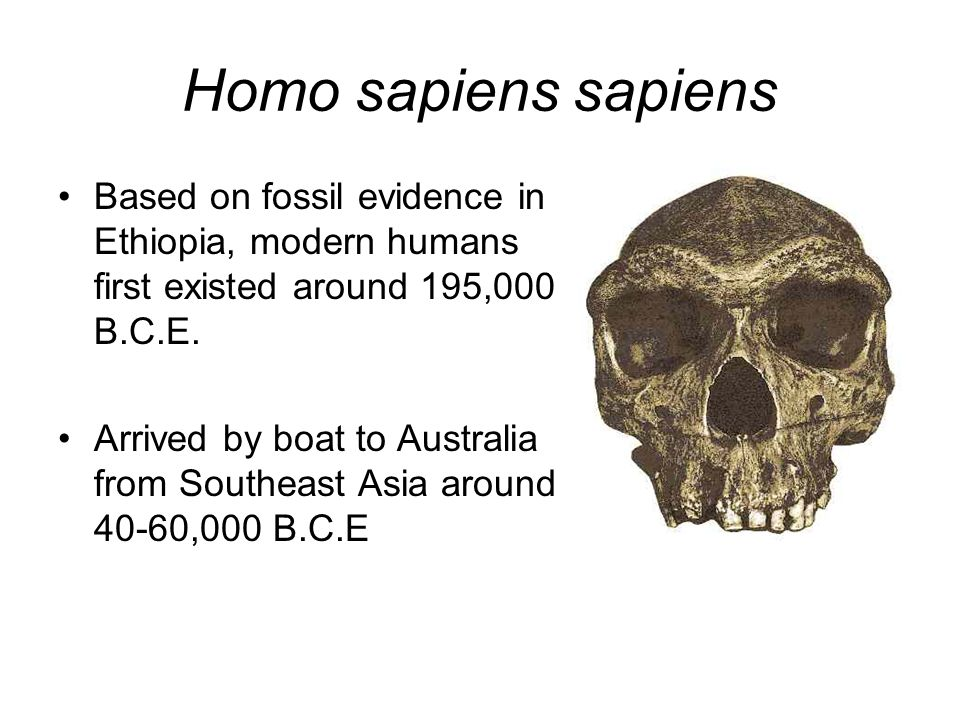 Homo sapiens sapiens Based on fossil evidence in Ethiopia, modern humans first existed around 195,000 B.C.E.