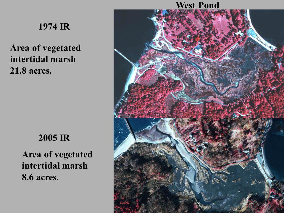 West Pond 1974 IR 2005 IR Area of vegetated intertidal marsh 21.8 acres.