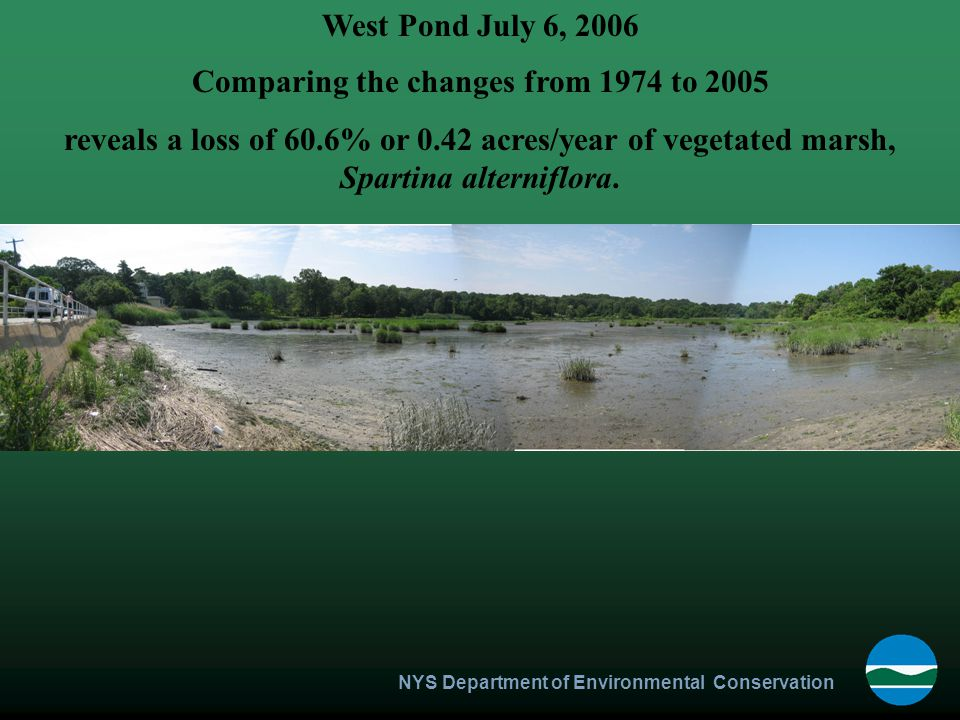 NYS Department of Environmental Conservation West Pond July 6, 2006 Comparing the changes from 1974 to 2005 reveals a loss of 60.6% or 0.42 acres/year