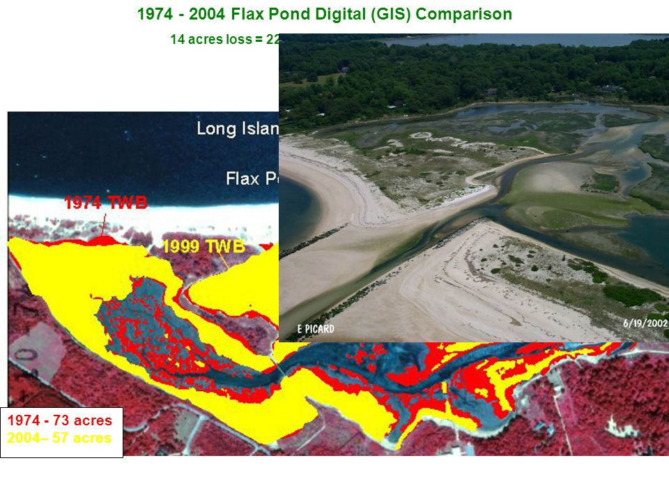 1974 - 2004 Flax Pond Digital (GIS) Comparison 14 acres loss = 22% loss / 30 years = 0.46 acres/yr 1974 - 73 acres 2004– 57 acres Smith's pond