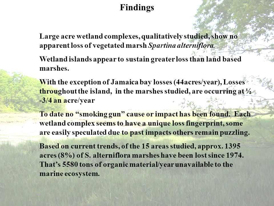 Findings Large acre wetland complexes, qualitatively studied, show no apparent loss of vegetated marsh Spartina alterniflora. Wetland islands appear t