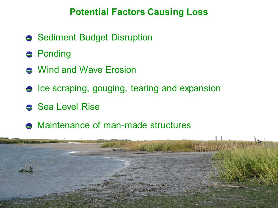 Potential Factors Causing Loss Sediment Budget Disruption Ponding Wind and Wave Erosion Ice scraping, gouging, tearing and expansion Sea Level Rise Maintenance of man-made structures