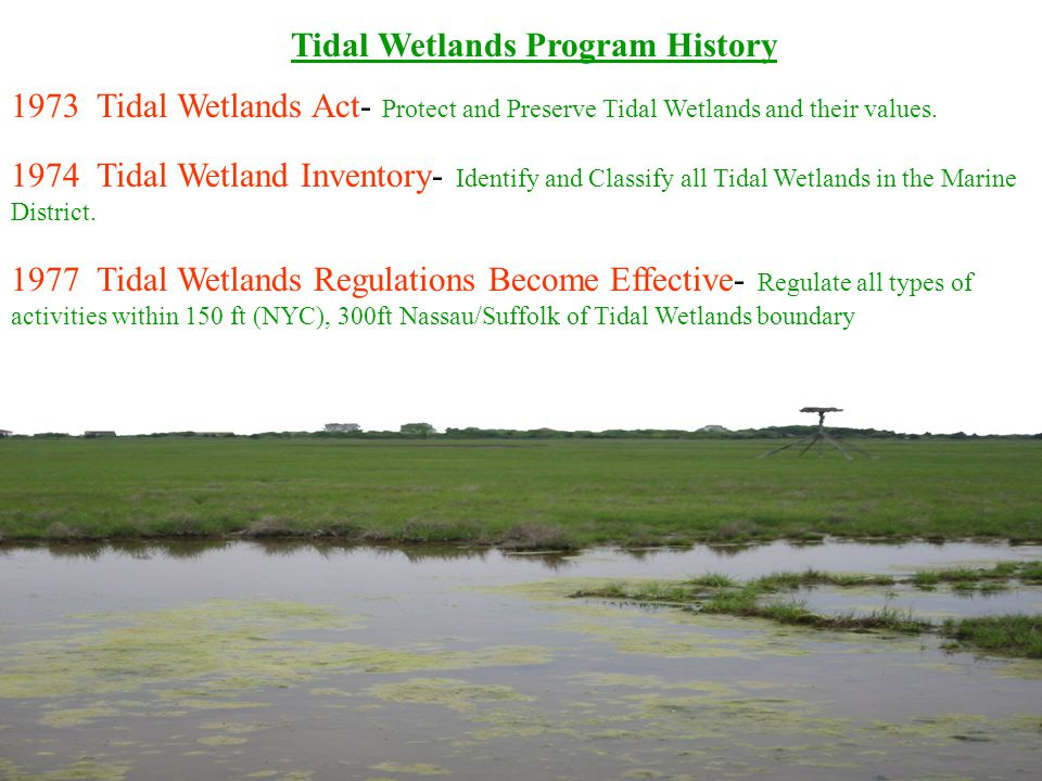Tidal Wetlands Program History 1973 Tidal Wetlands Act- Protect and Preserve Tidal Wetlands and their values.