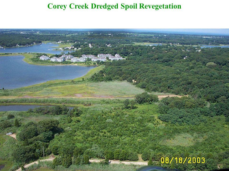 Corey Creek Dredged Spoil Revegetation