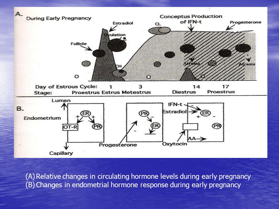 (A)Relative changes in circulating hormone levels during early pregnancy (B)Changes in endometrial hormone response during early pregnancy