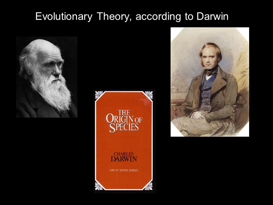 Evolutionary Theory, according to Darwin