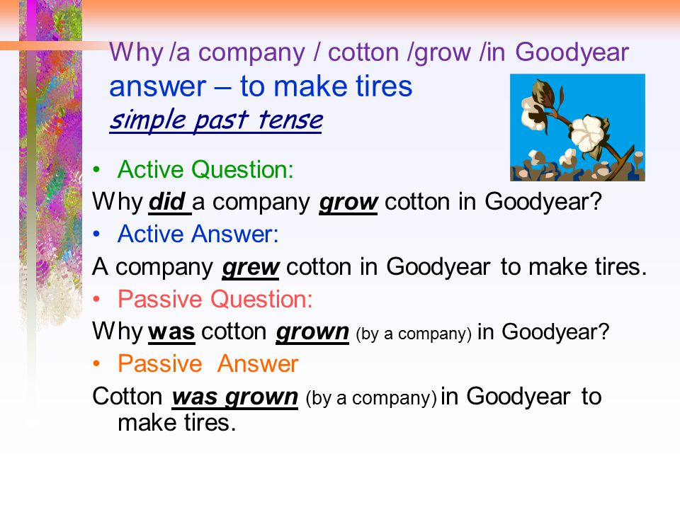 Why /a company / cotton /grow /in Goodyear answer – to make tires simple past tense Active Question: Why did a company grow cotton in Goodyear? Active