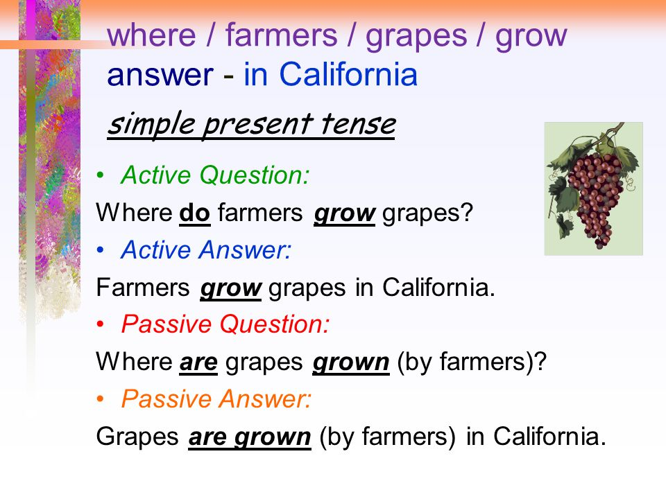 where / farmers / grapes / grow answer - in California simple present tense Active Question: Where do farmers grow grapes? Active Answer: Farmers grow