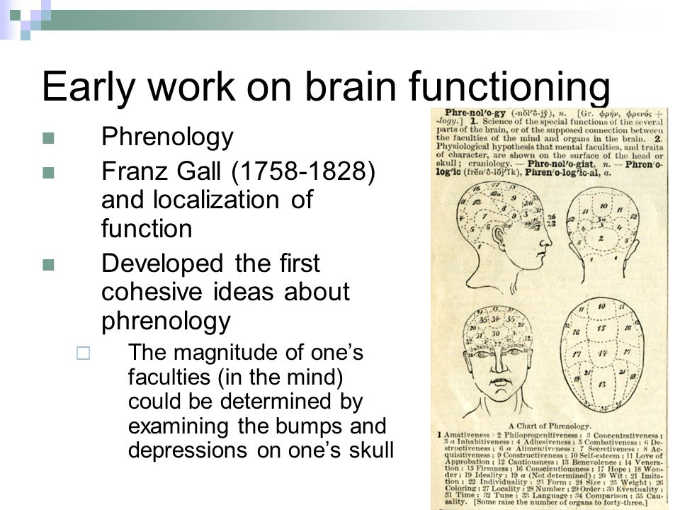 Early work on brain functioning Phrenology Franz Gall (1758-1828) and localization of function Developed the first cohesive ideas about phrenology  The magnitude of one's faculties (in the mind) could be determined by examining the bumps and depressions on one's skull