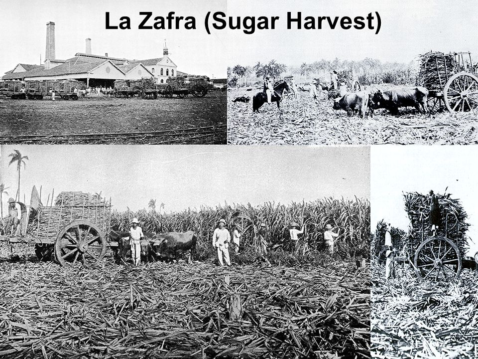 La Zafra (Sugar Harvest)