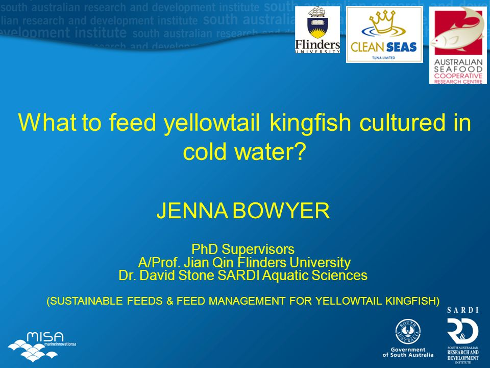 What to feed yellowtail kingfish cultured in cold water? JENNA BOWYER PhD Supervisors A/Prof. Jian Qin Flinders University Dr. David Stone SARDI Aquat